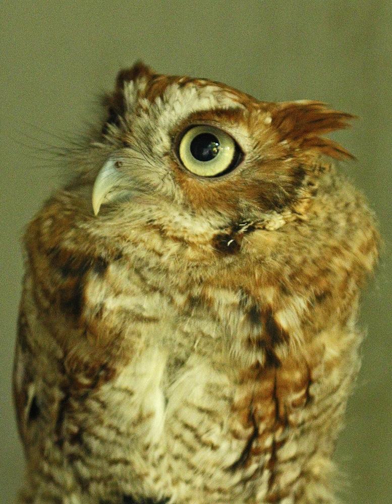 Secret Life Of Owls (10-10-2021)